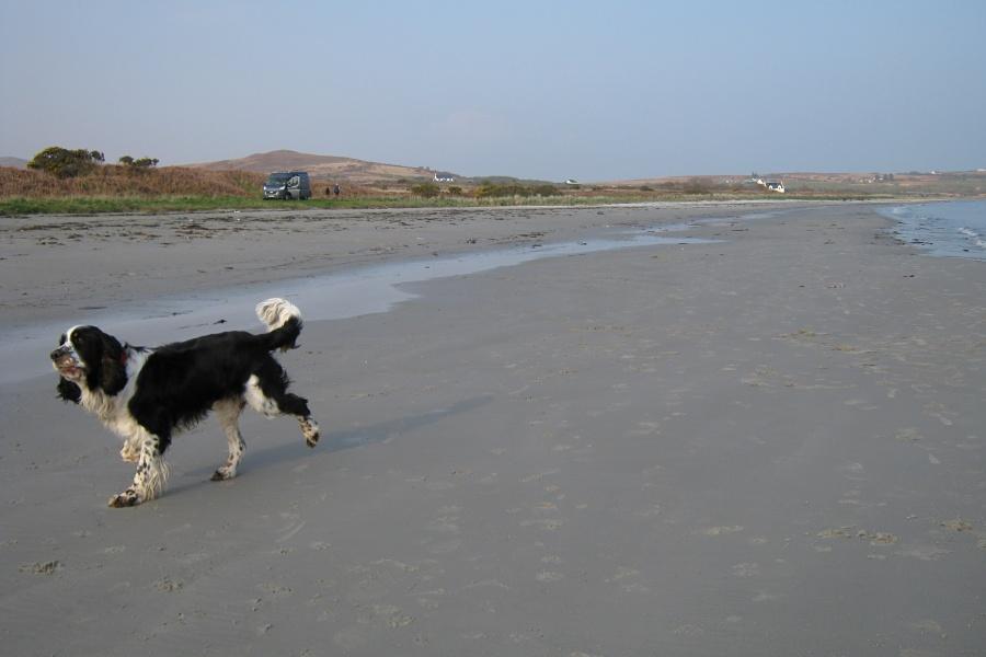 Dogs love Jura