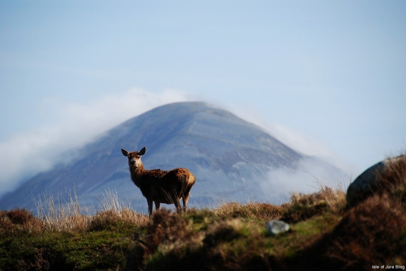 Jura is also known as the Island of Deer